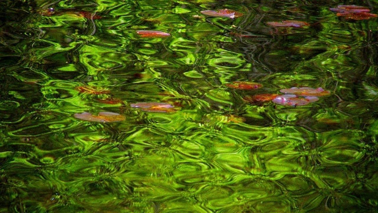 Sp5etba0t4omxjn0epf2 green ripples
