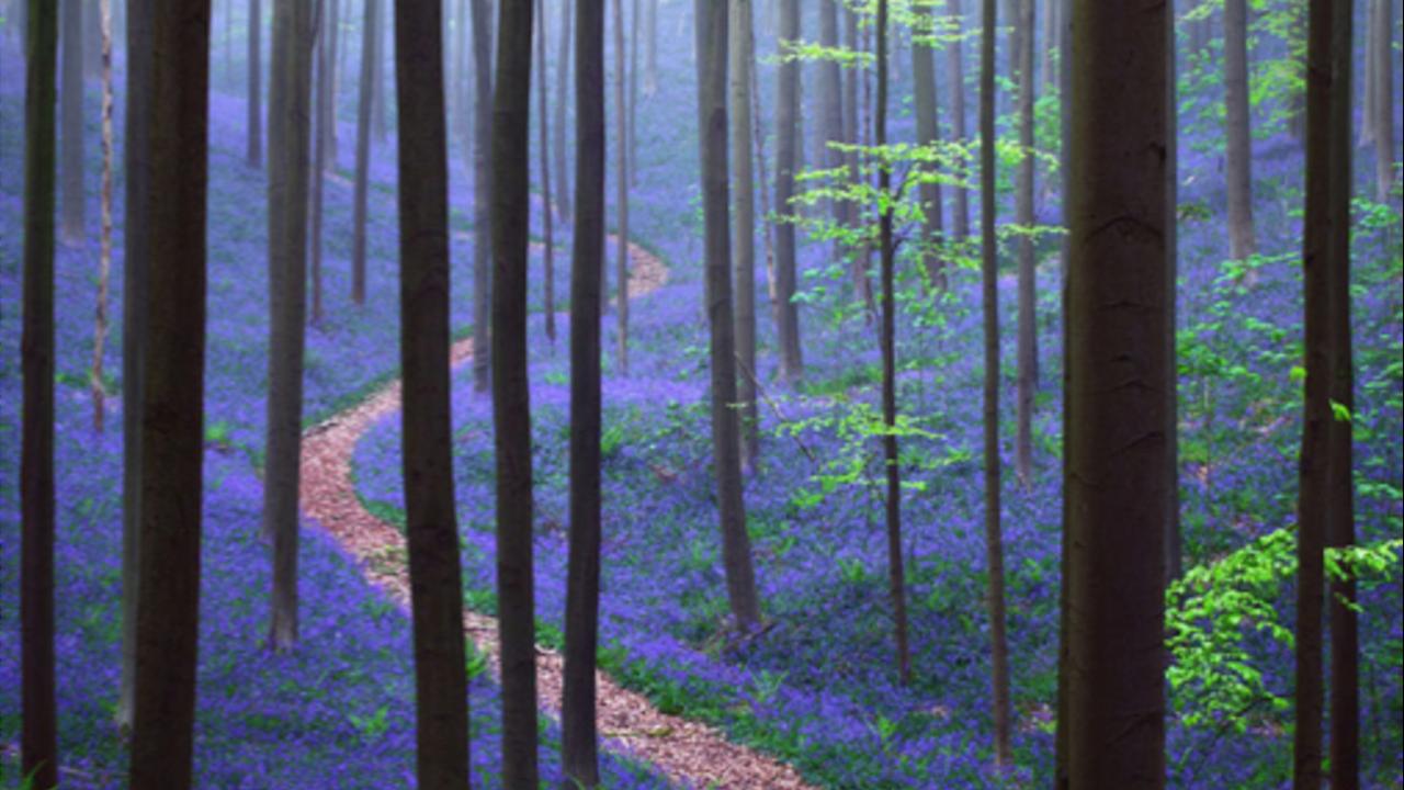 Jxcvq3zlr9enpajikhvu purple path through trees