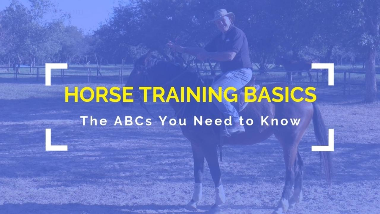 Dfbmne8drnr7qeijgsev horse training basics product cover