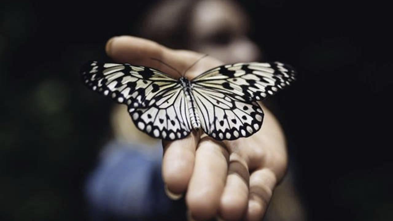 P3inmauisbch8m2a31lk gameboard butterfly