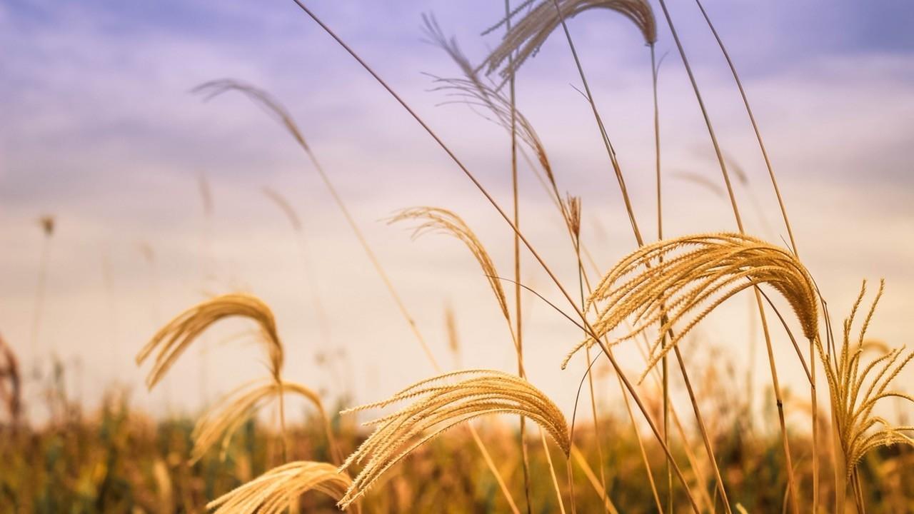 4jvfoob9tdearjnmljap barley