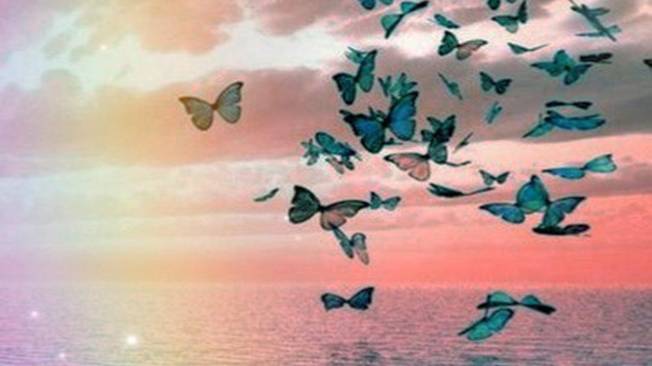 Xmhwszltl2rqjszx0vtu papillon rainbow