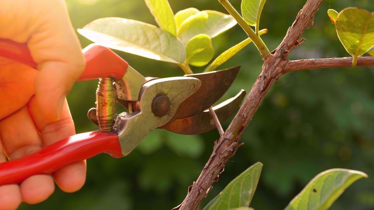 Fzvamumlq2wj3cpkzx9h beska ra tra d och buskar fra n a ppeltra d till rhododendron