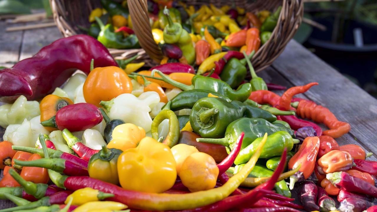 T4vie0zzsv2kowmuwbin odla chili   fra n fro till sko rd och heta recept