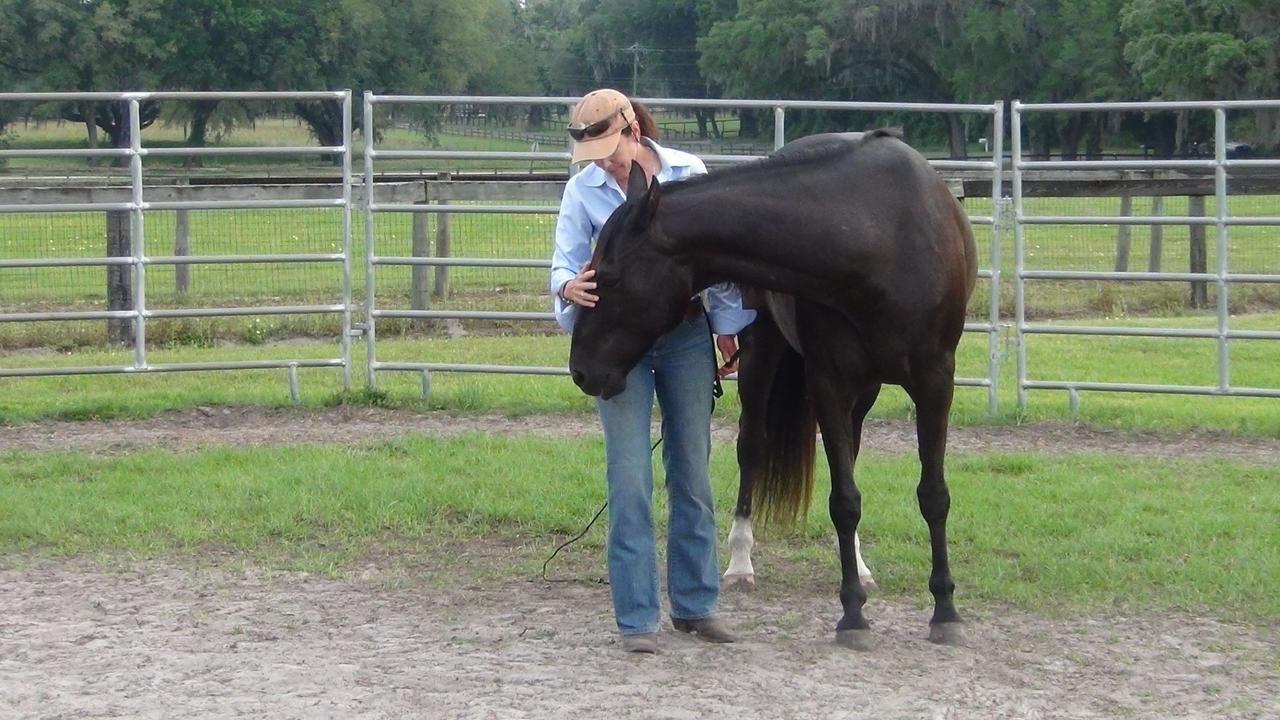 Hndkxy9mqhwtfud8tbsm horse love 7
