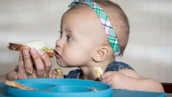 babyled weaning baby eating a sandwich.