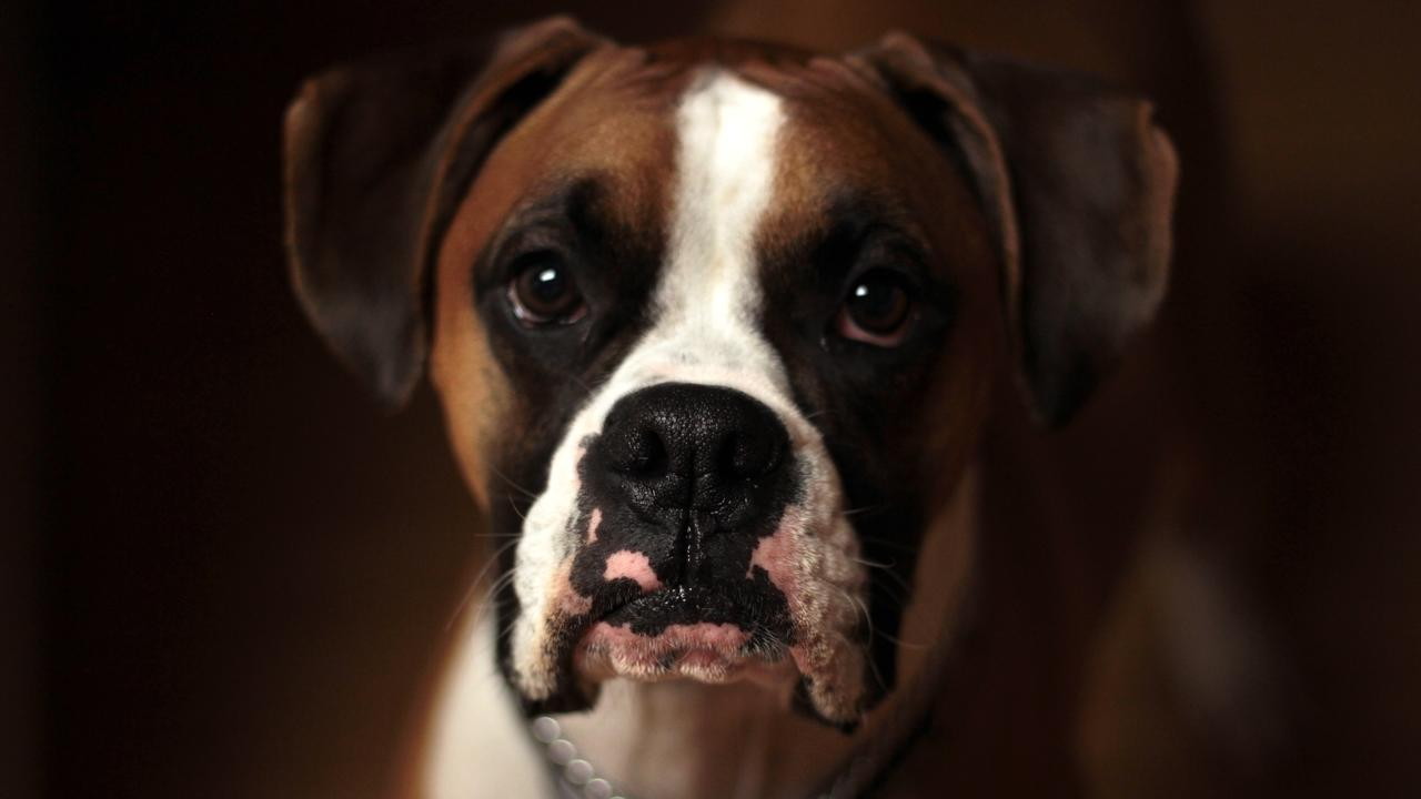 The Best Way to Diagnose Skin Tumors on a Dog