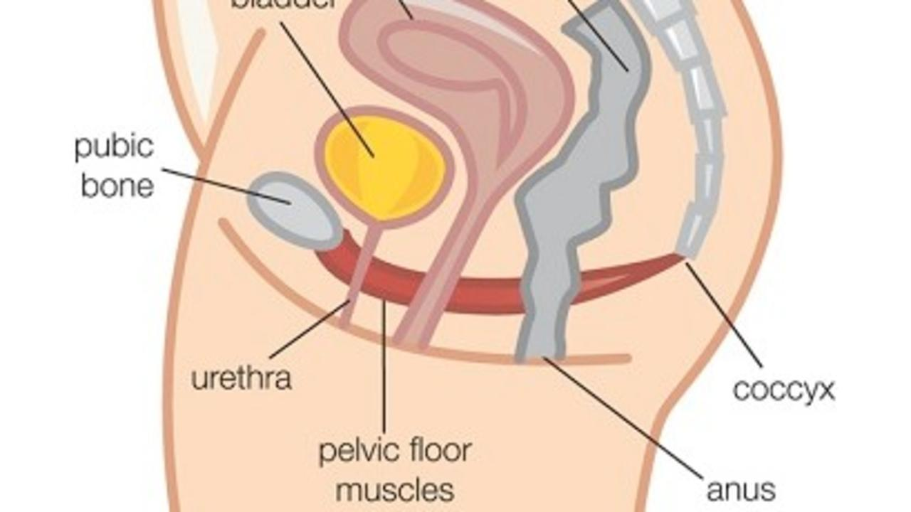 That Thing Called The Pelvic Floor