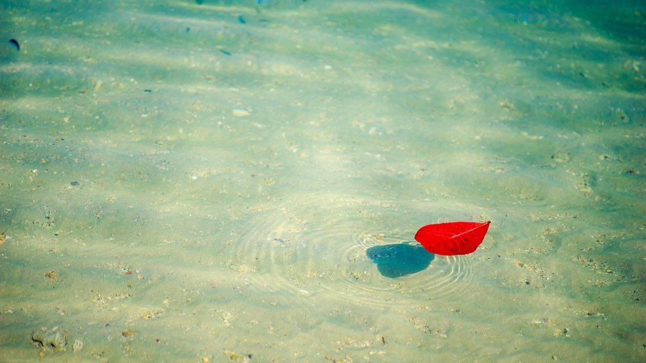 single leaf on water surface