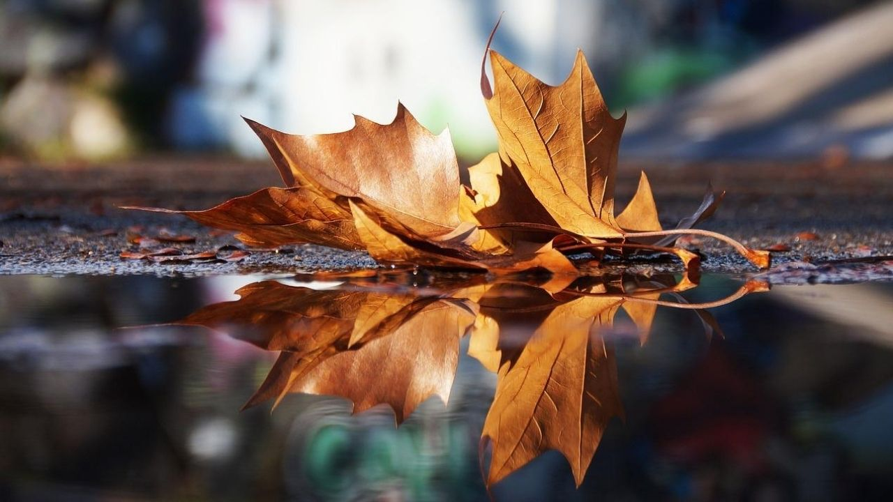 brown leaf reflecting in puddle of water