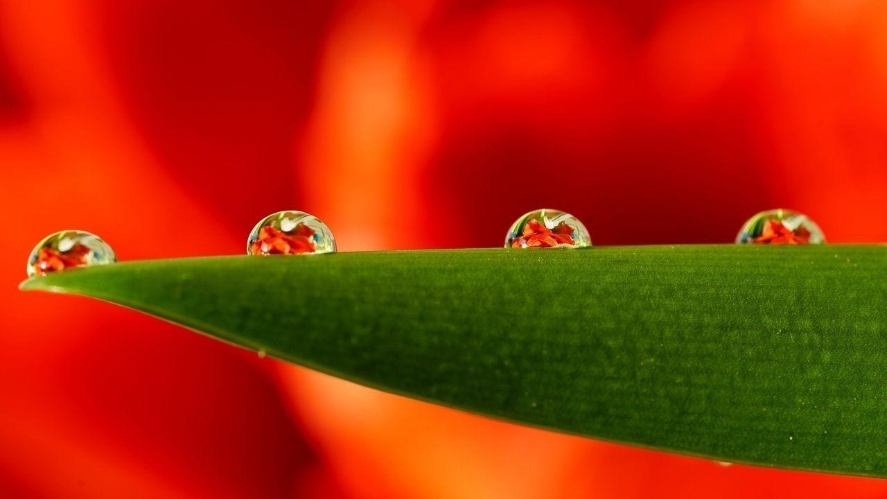 four water drops on a leaf