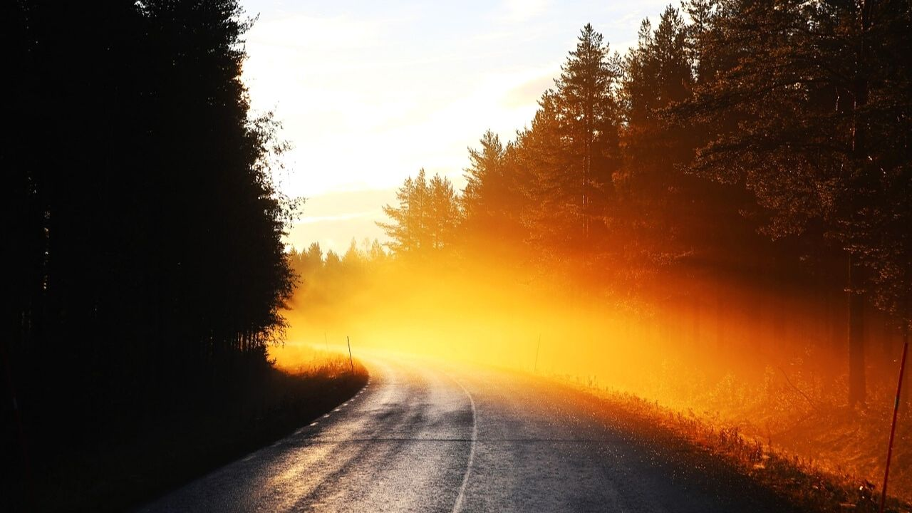 orange mist on bend in road with trees either side