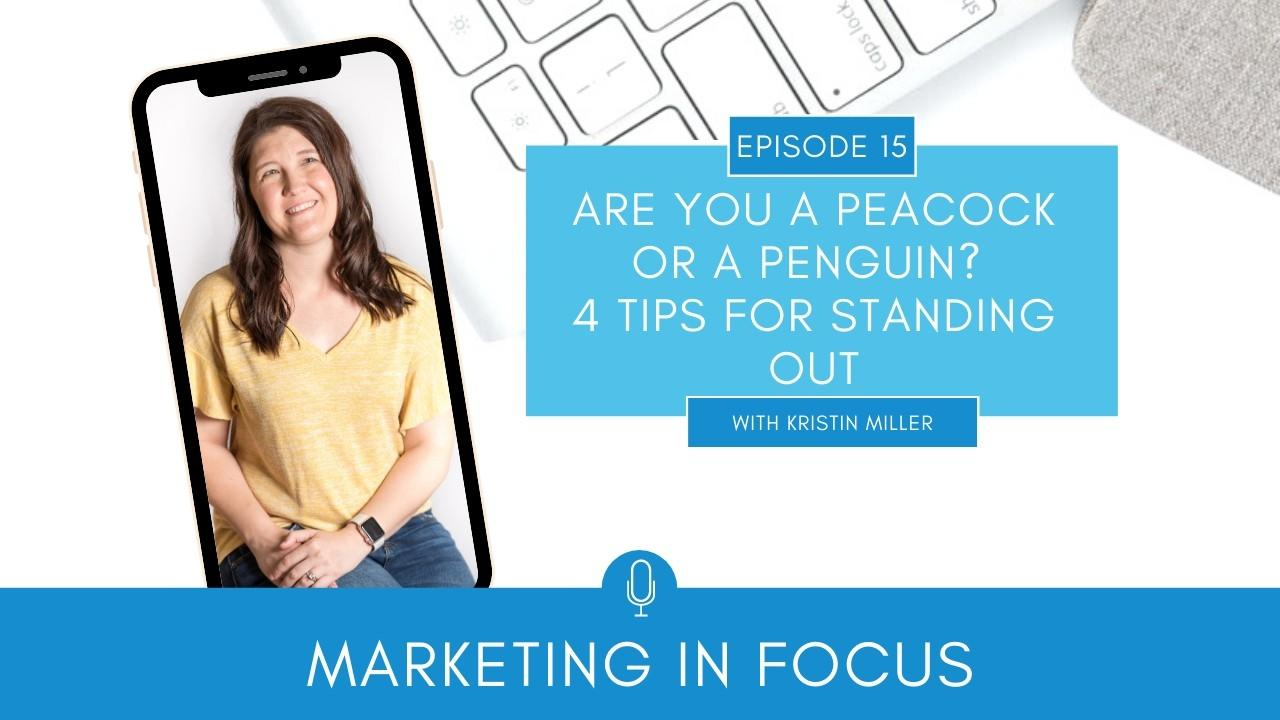 Marketing in Focus Episode 15 Are You a Peacock or a Penguin? 4 Tips For Standing Out