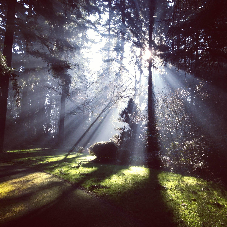 light peeking through dark forest