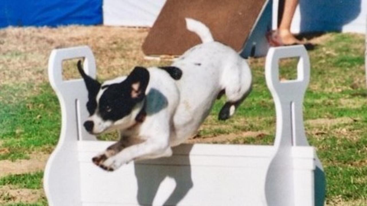 Peachy Healing A Dogs Neck Injury Bralicious Painted Fabric Chair Ideas Braliciousco