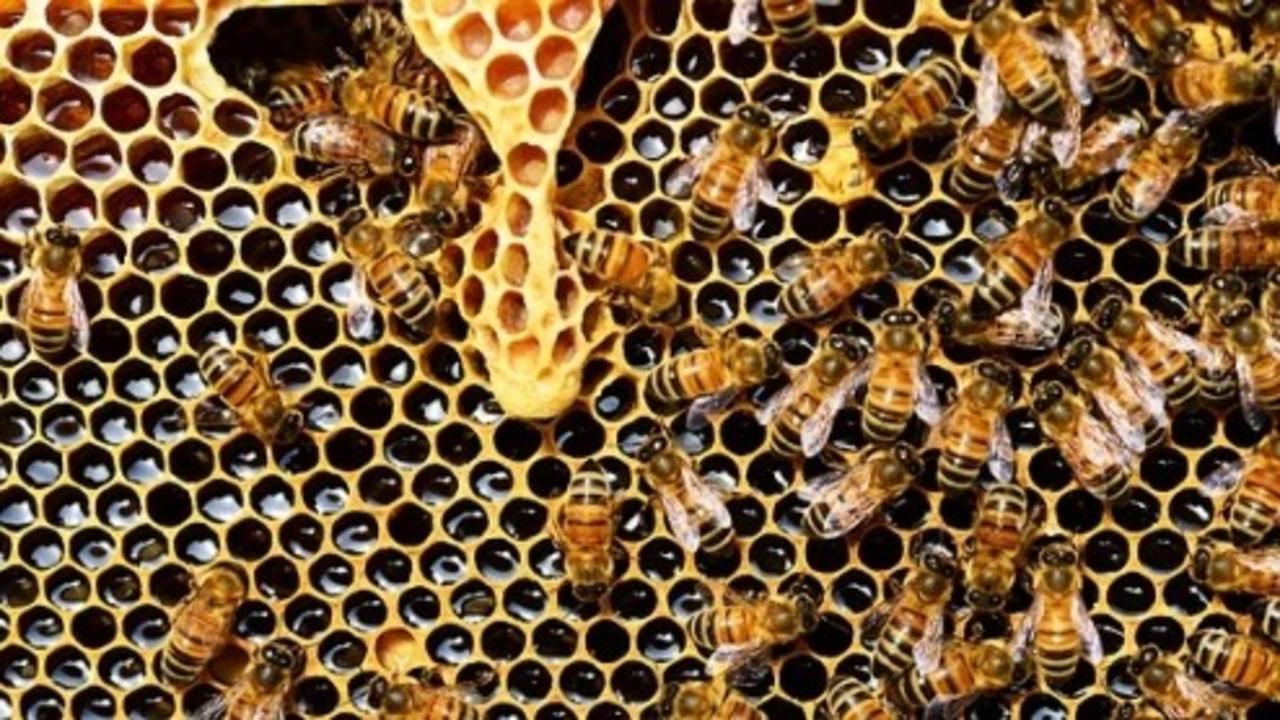 Is Honey Vegan? Why Do Vegans Not Eat Honey?
