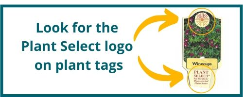 Look for flowers marked with a Plant Select tag at your local garden center.
