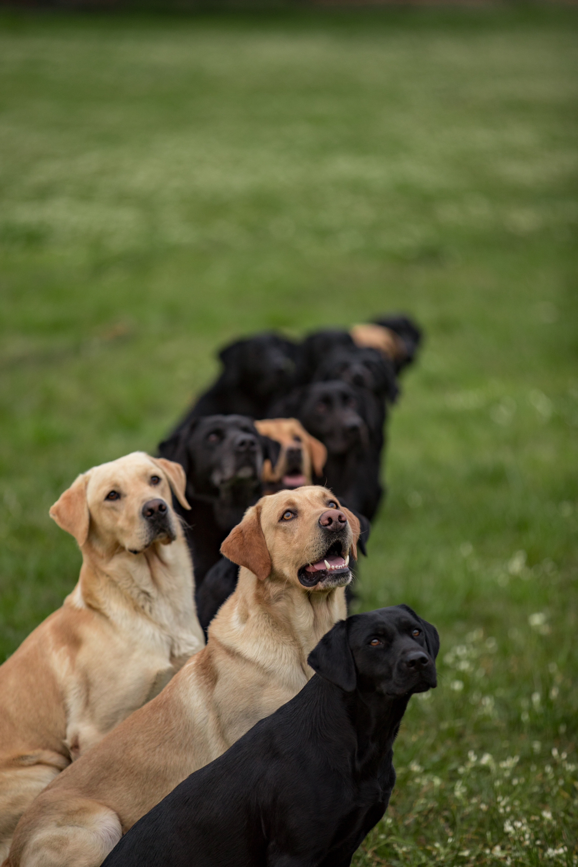 How to Stop a Retriever from Breaking
