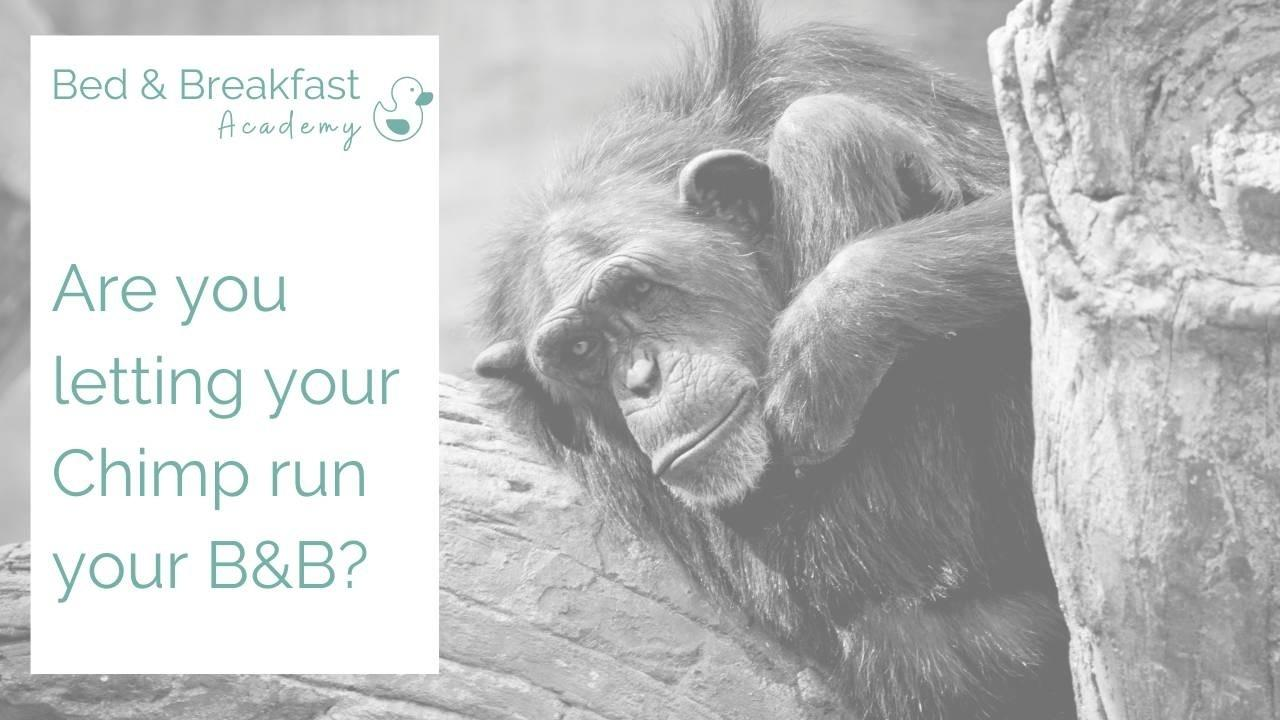 Are you letting your chimp run your B&B | grumpy chimp | running a bed and breakfast