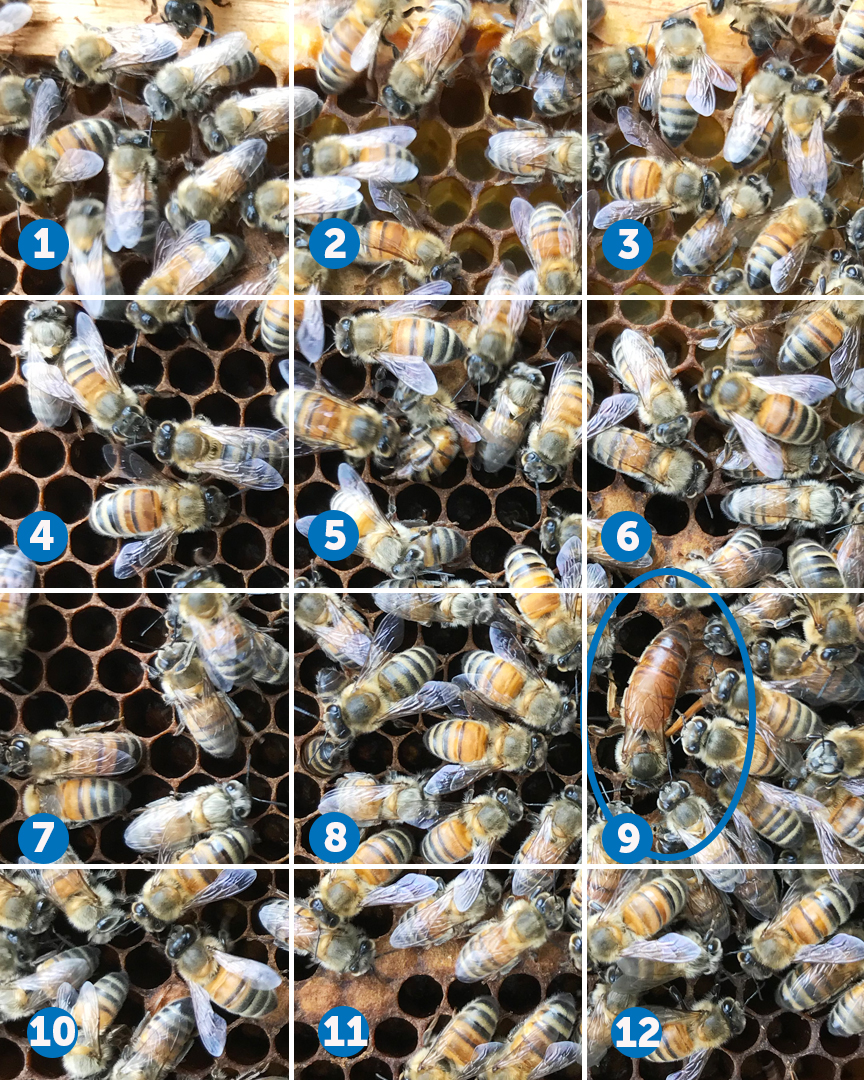 find the queen test 3