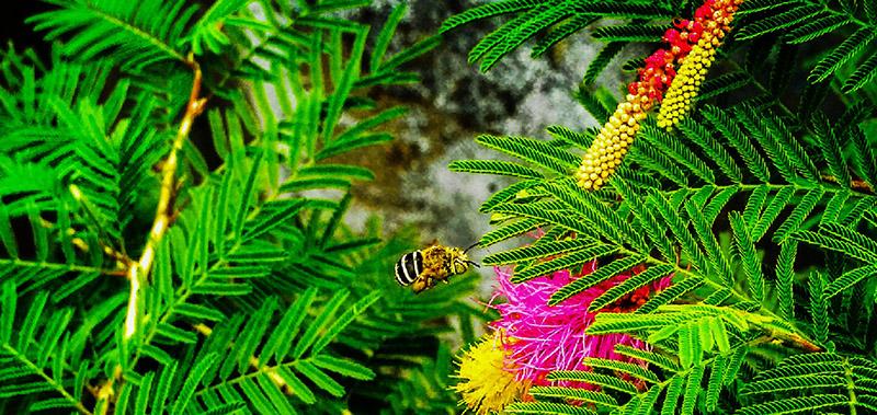 mason bee in a flower