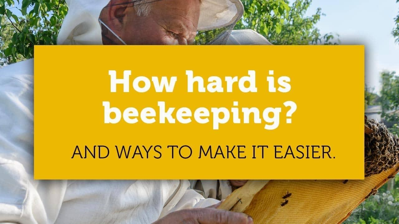 how hard is beekeeping title image