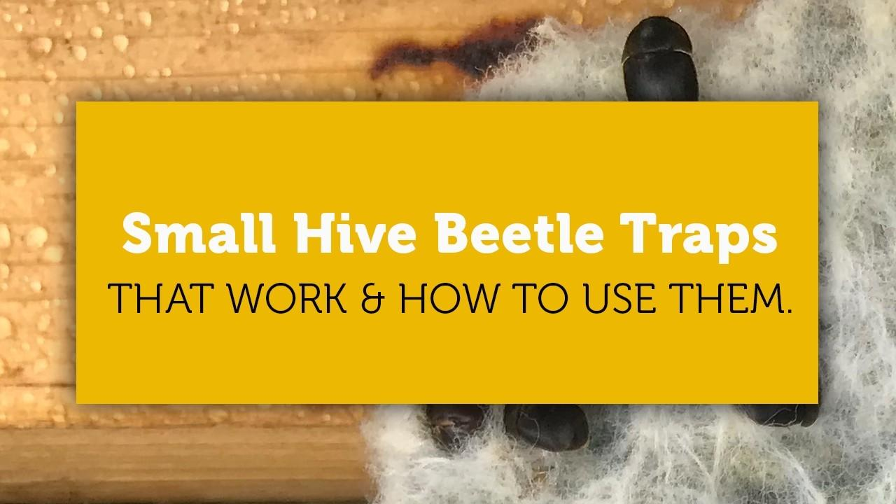 small hive beetle traps that work blog cover image