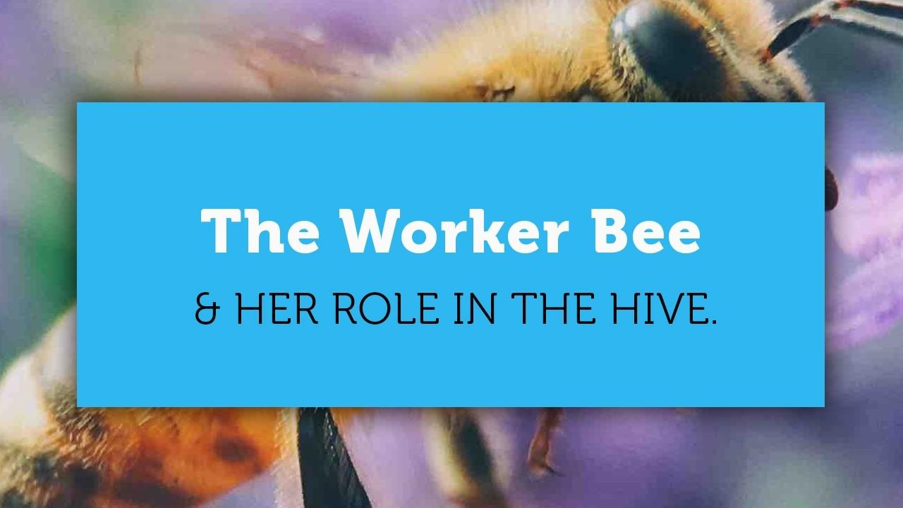 worker bee flying