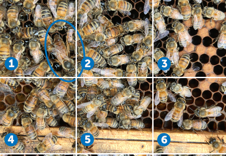 find the queen test 4