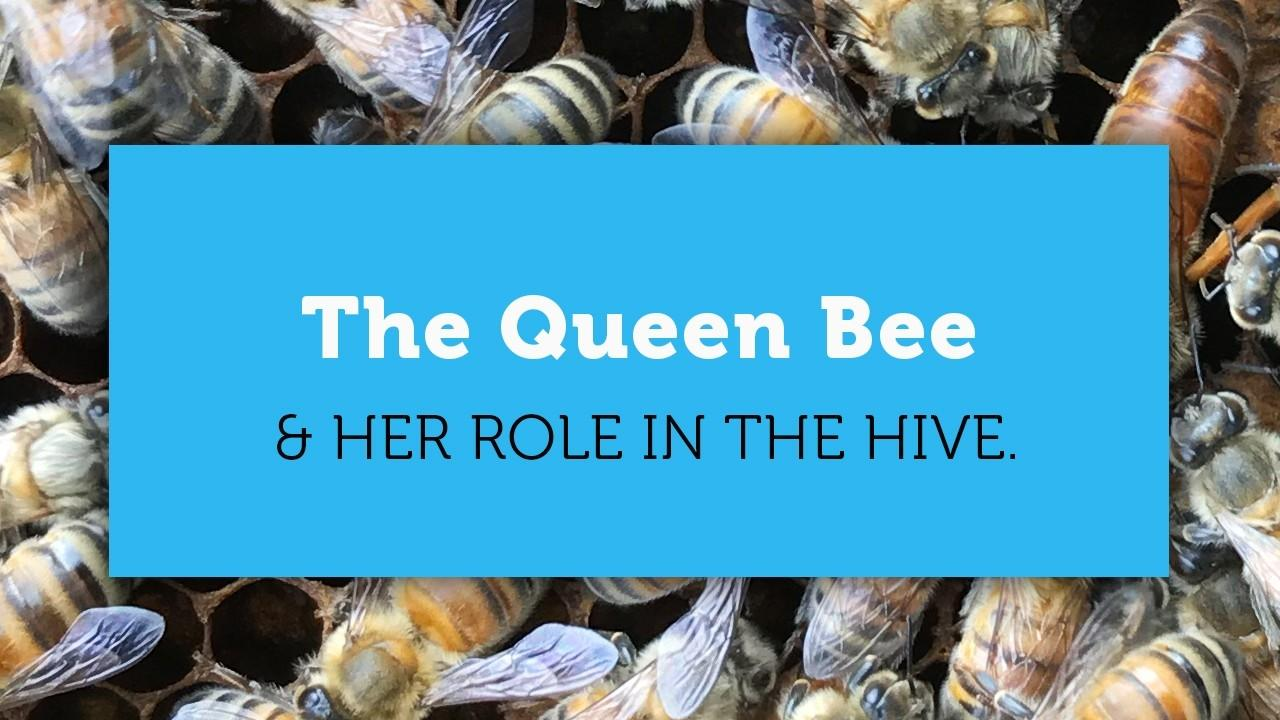 the queen bee blog article title image