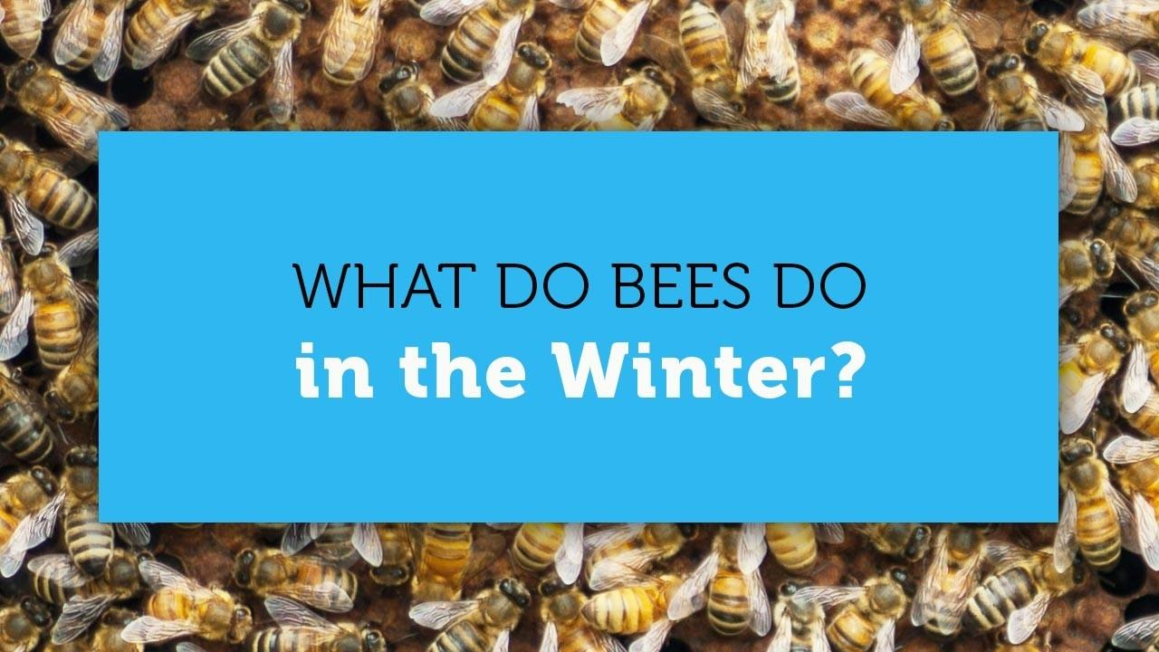 what honeybees do in the winter blog cover