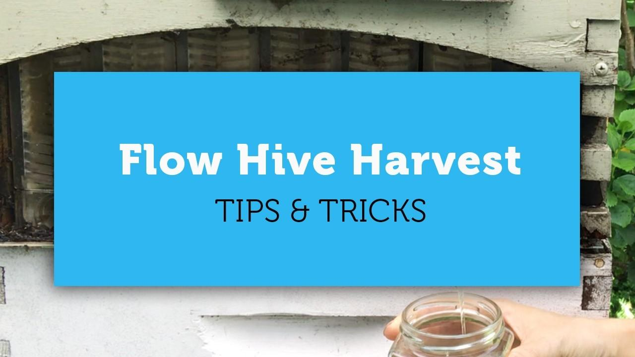harvesting from the flow hive tips cover image