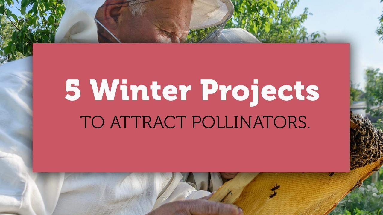 5 winter garden project for the pollinators blog title image