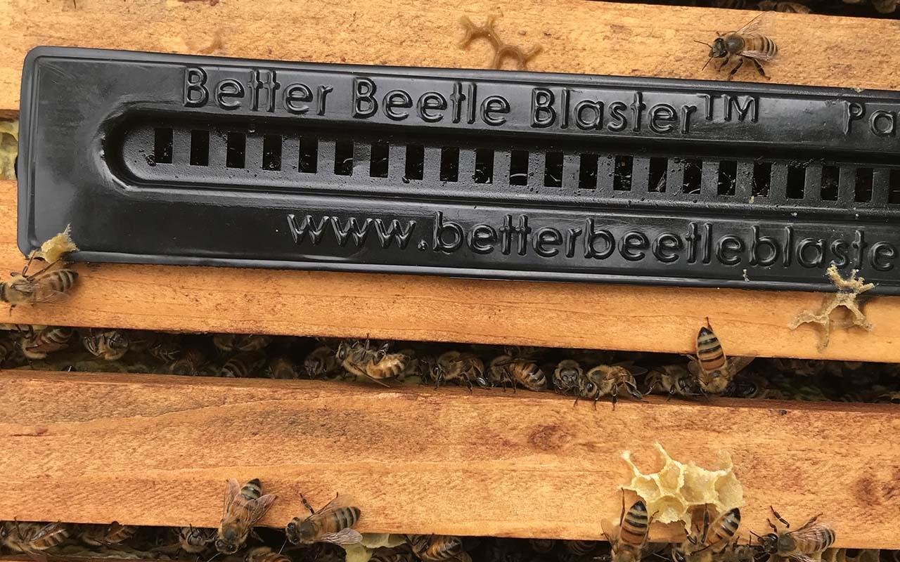 beetle blaster trap in beehive