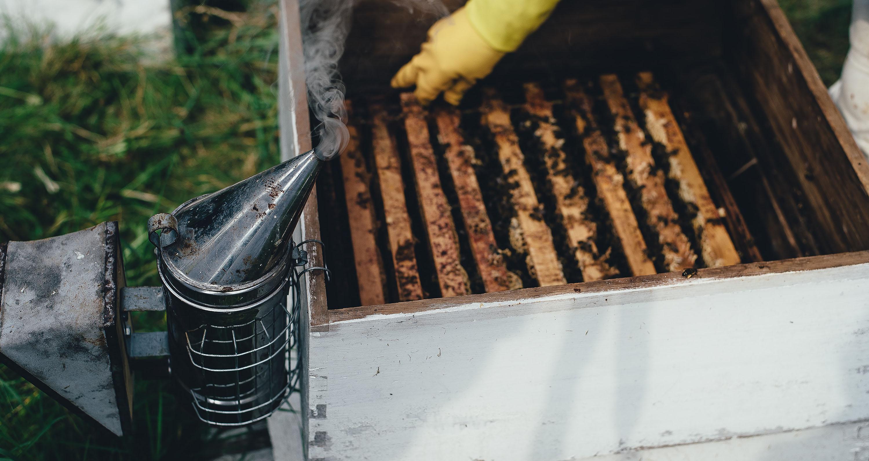 smoker lit on beehive