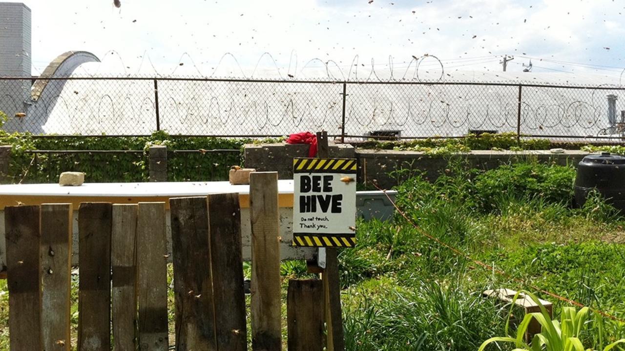 rooftop beehive