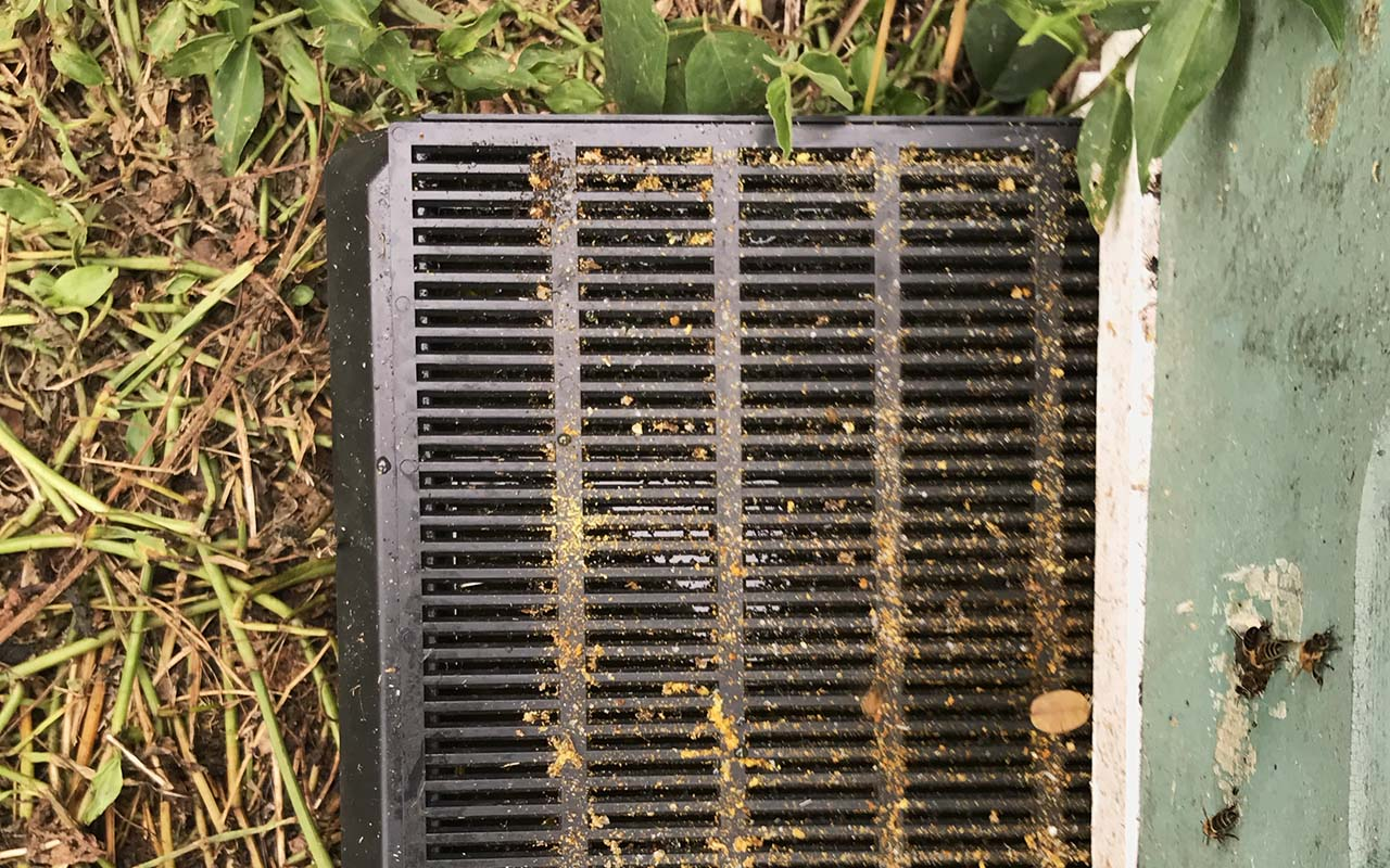 screened bottom with oil pan under beehive