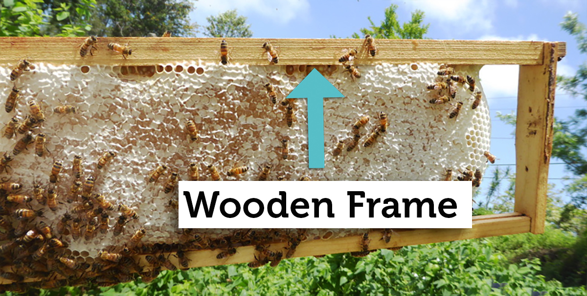 wooden beehive frame with honey comb
