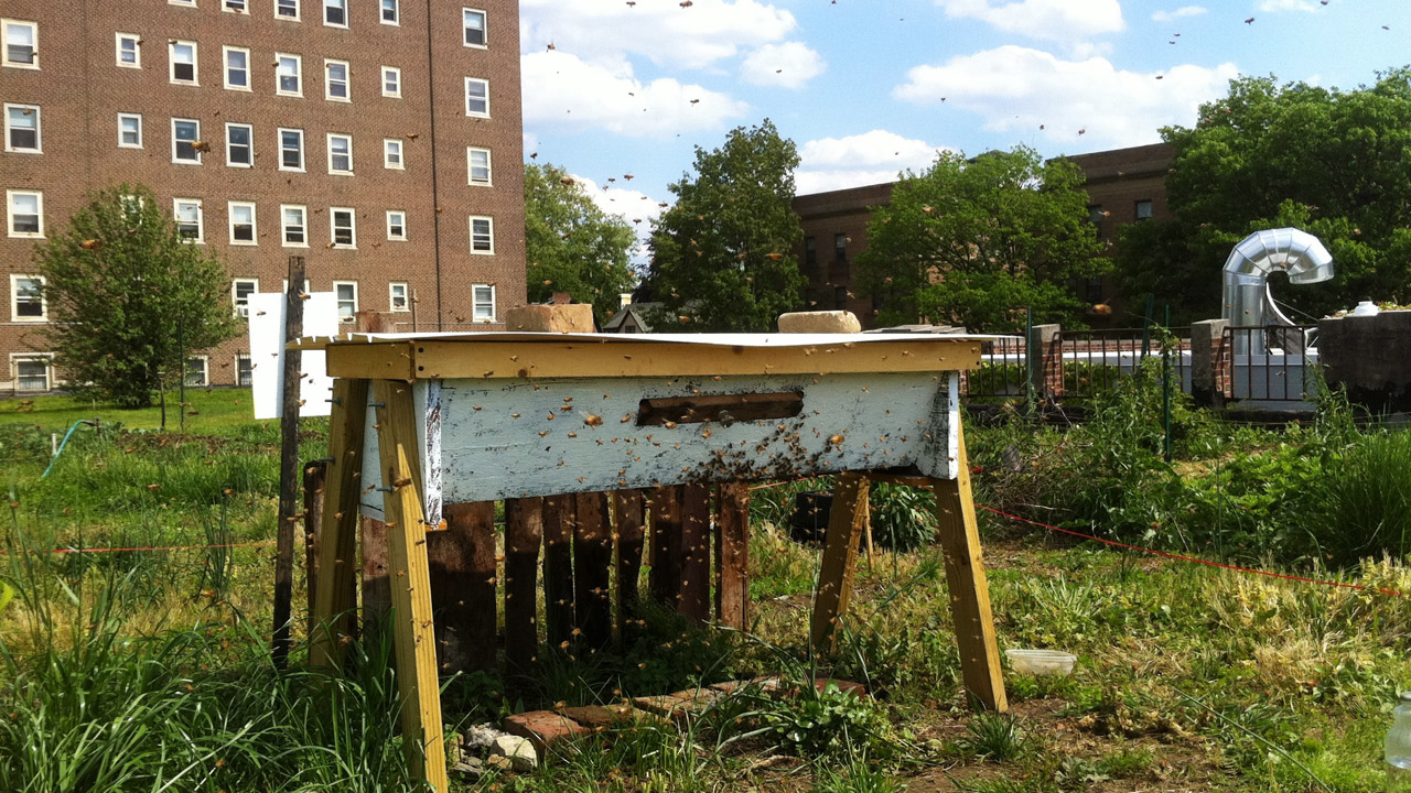 top bar beehive on roof