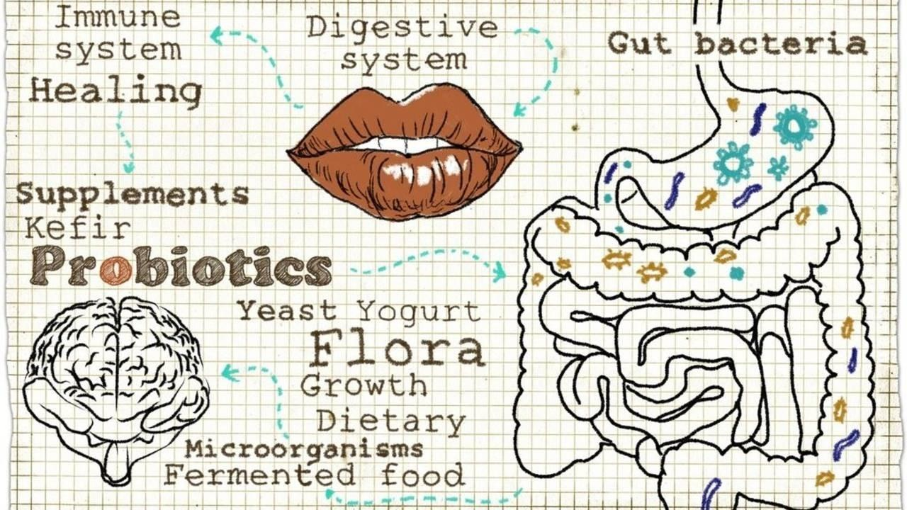 drawing of digestive healing components on graph paper