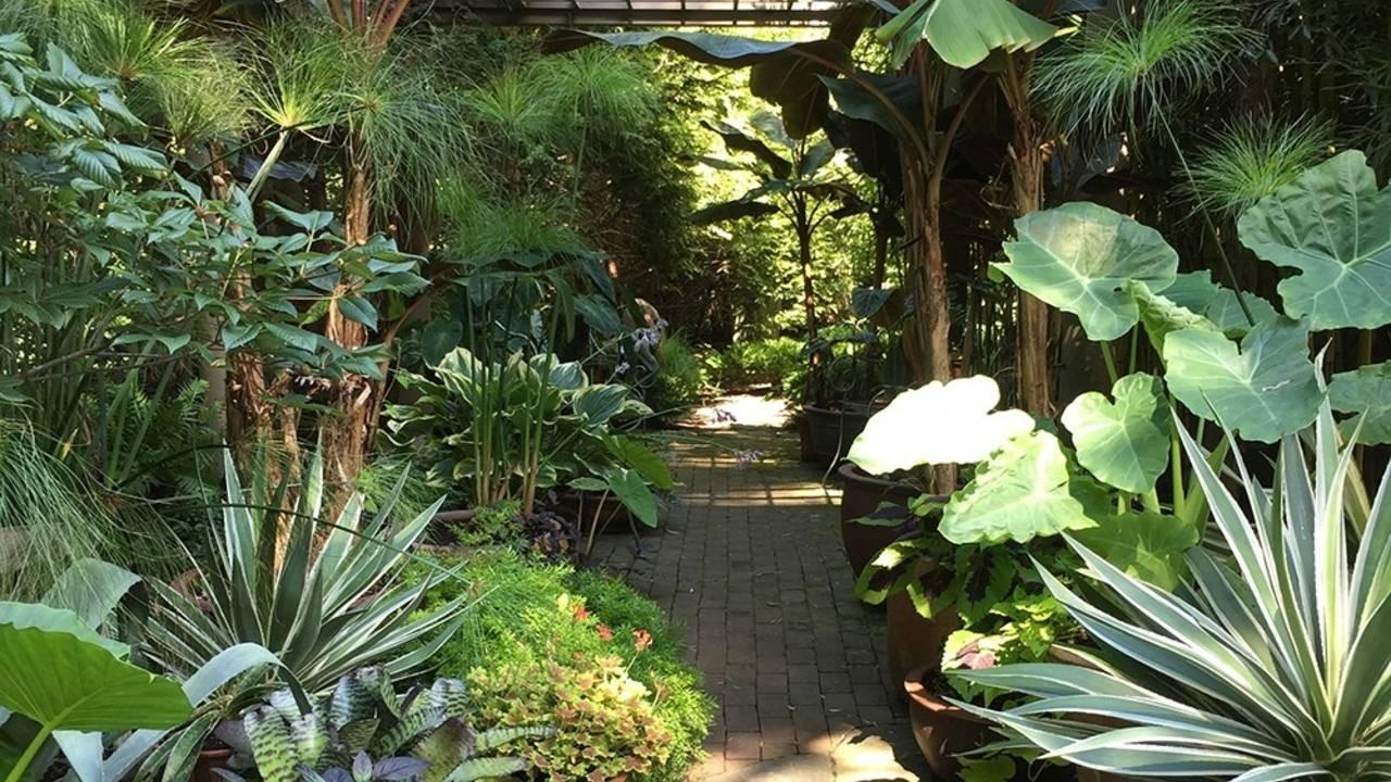 tropical side yard