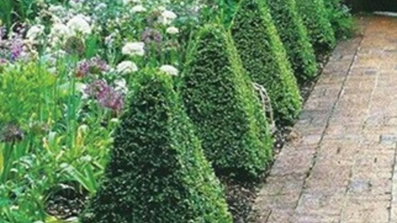 triangles in the garden as topiary