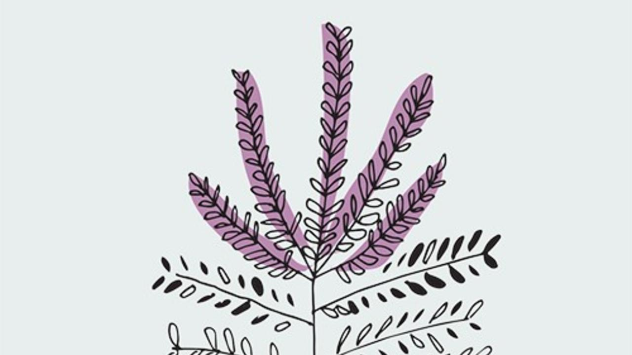 Leadplant illustration