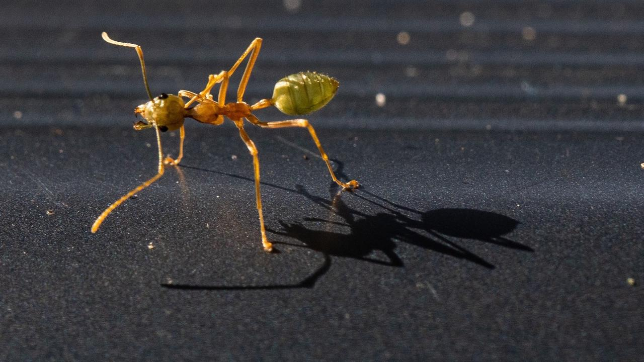 Ant with shadow