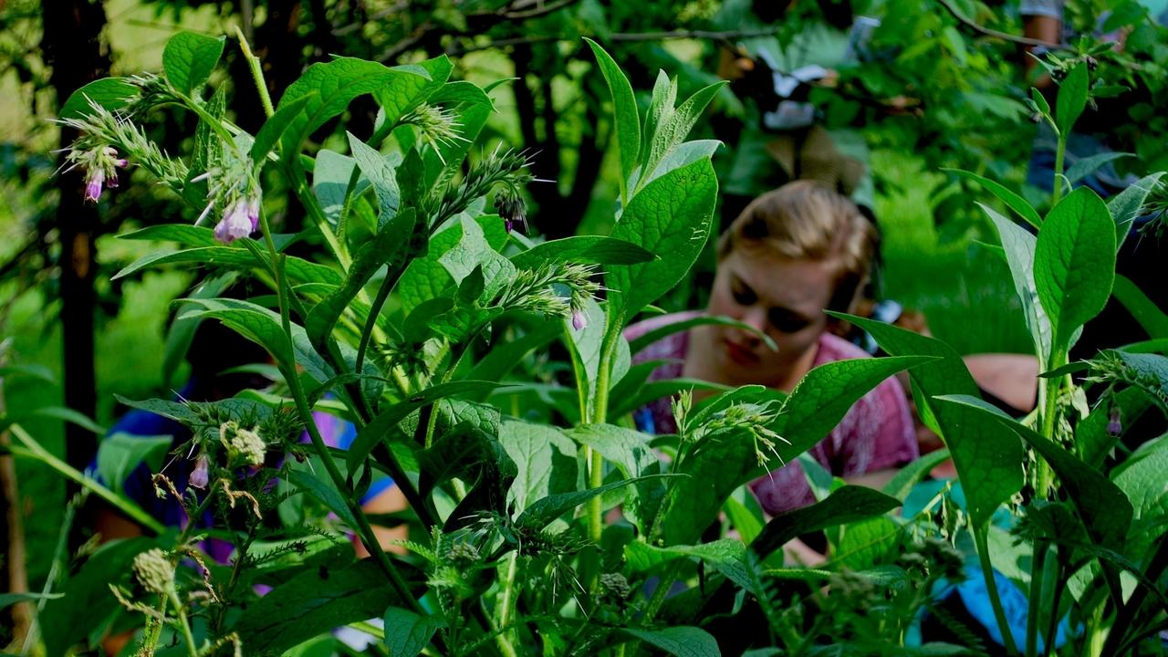 woman in a patch of comfrey