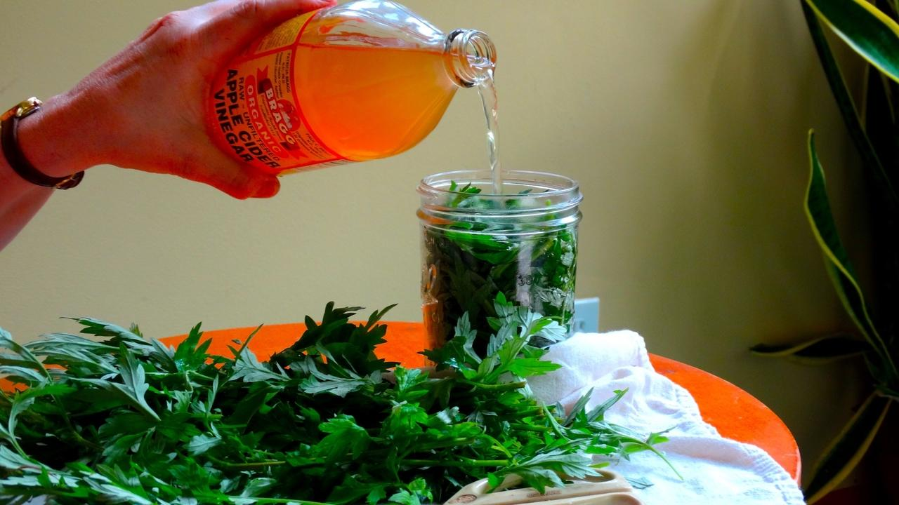 Making wild mugwort into herbal vinegar for minerals and flavor