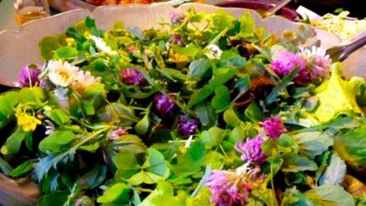 salad collected from wild edible weeds from the yard and garden