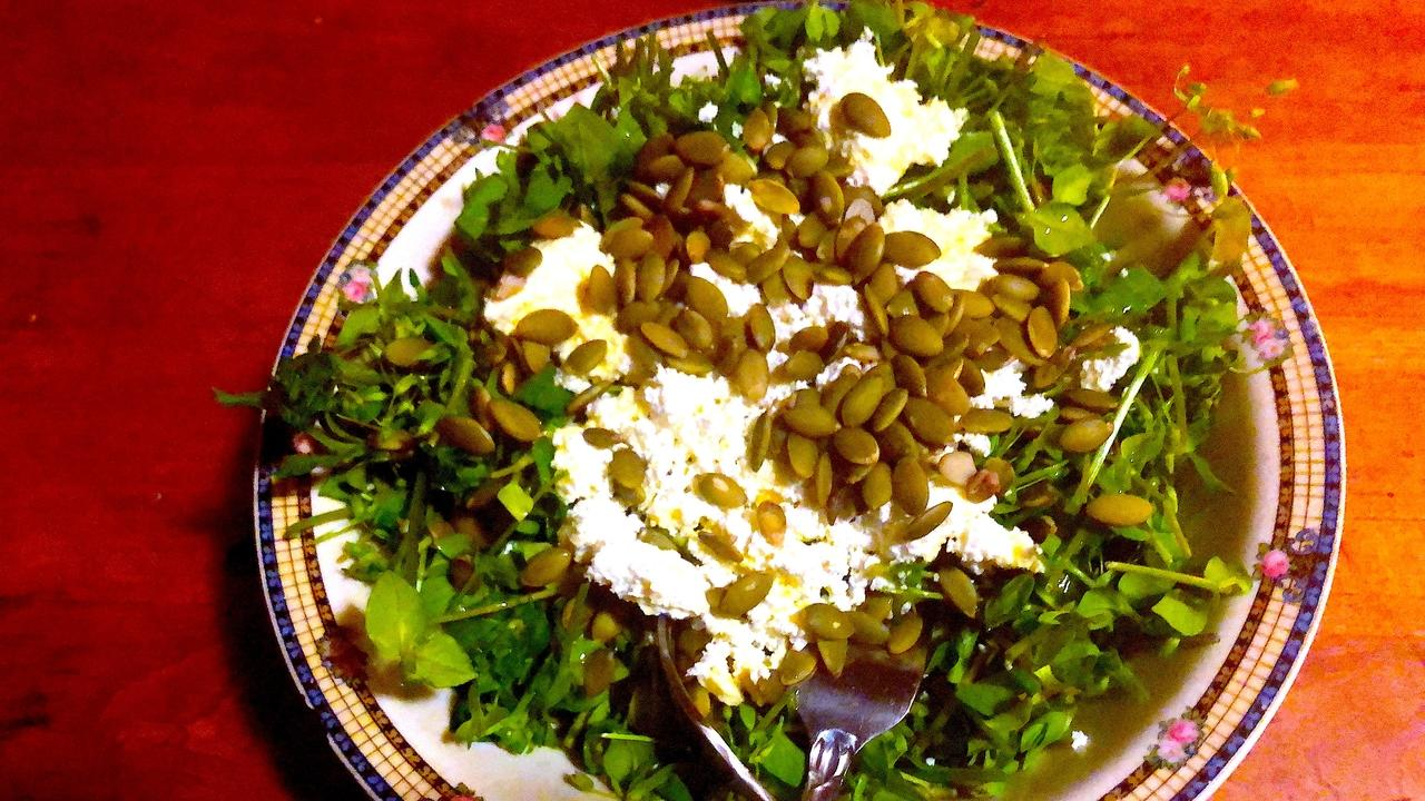 salad of chickweed, an edible and medicinal wild plant harvested in spring and fall