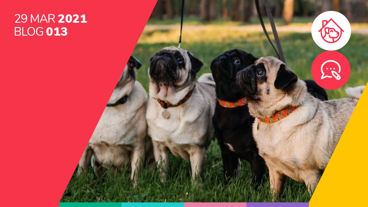 ¿Cuáles son las consecuencias de no sacar a tu perro a pasear?