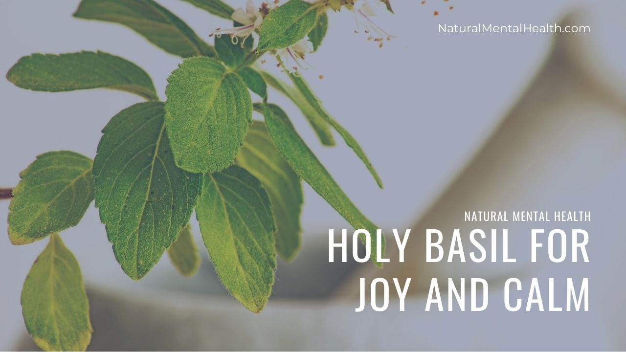 A fresh Holy Basil plant inside a pestle and mortar. Title reads Holy Basil for Joy and Calm. NaturalMentalHealth.com